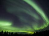 The Aurora Borealis Streaks the Sky Above Birch Creek Fotografisk trykk av Michael Melford