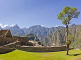 A Lone Tree and the Pre-Colmubian Inca Ruins at Machu Picchu Photographic Print by Mike Theiss