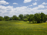 Spring Meadow in Druid Park Photographic Print by Richard Nowitz