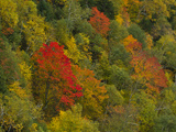 Autumn Foliage in the Saint Huberts Region of the Adirondacks Photographic Print by Michael Melford