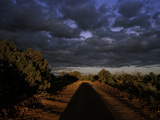 The Shadow of a Car on Jeep Road Heading to Egypt Overlook Photographic Print by Diane & Len Cook & Jenshel