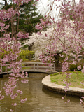 View of a Japanese Garden in a Park with Blooming Cherry Trees Photographic Print by Darlyne A. Murawski