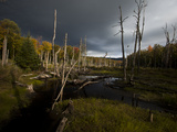 Swamp on Trail to Mt. Van Hovenberg in the High Peaks Region Photographic Print by Michael Melford