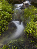 Mountain Stream in Lush Plant Growth Photographic Print by Greg Winston