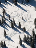 Aerial View of Snowmobile Track Patterns in the Trees Near Park City Fotografisk tryk af Pete McBride