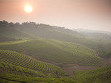 The Largest Plantation in the Area and the Top Producer of Puer Tea Photographic Print by Michael S. Yamashita