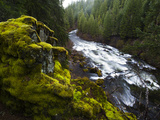 The Upper Rogue River Running Through Forested Canyon Photographic Print by Michael Melford