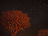 Campfire Lit Acacia Trees Against a Star Studded Sky Photographic Print by Michael Melford