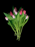 High Resolution Scan of a Bouquet of Tulips Photographie par Amy &amp; Al White &amp; Petteway