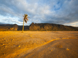 A Lone Palm Tree on the West Coast of Socotra Island Photographic Print by Michael Melford
