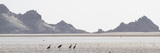 Shorebirds at Detwah Lagoon Photographic Print by Michael Melford