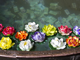 Flowers Floating in a Wishing Well Photographic Print by Michael Melford