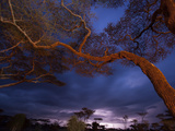 An Acacia Tree Branch Cuts across the Deepening Sky over Tanzania Photographic Print by Michael Melford