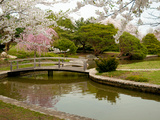 Japanese Garden with Cherry Trees, Pond and Footbridge in Springtime Photographic Print by Darlyne A. Murawski