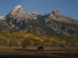 Horses and Fall Colors in Grand Teton National Park, Wyoming Photographic Print by Greg Winston
