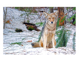 Yosemite Guard Dog Premium Giclee Print by Matt Blaisdell