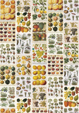 Frutta E Verdura - Vintage Style Italian Fruit Collage Poster Psters