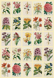Botananica (Flowers) - Vintage Style Italian Poster Foto