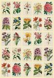 Botananica (Flowers) - Vintage Style Italian Poster Photo