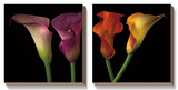 Jewel Calla Lilies Posters by Assaf Frank
