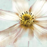 Soft Cosmos Prints by Donna Geissler