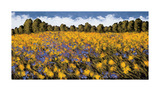 Fields of Gold Giclee Print by Wayne Leidenfrost