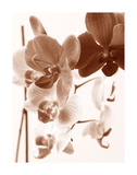 Dreamy Orchids I Giclee Print by Ily Szilagyi