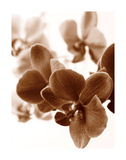 Dreamy Orchids II Giclee Print by Ily Szilagyi