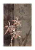Orchid Sketch II Giclee Print by Tandi Venter