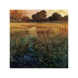 Golden Creek Giclee Print by Philip Craig