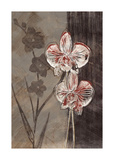 Orchid Sketch I Giclee Print by Tandi Venter