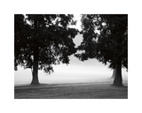 Fog in the Park II Giclee Print by Gary Bydlo