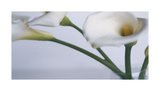Springplicity I Impression giclée par Cinzia Ryan