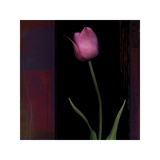 Red Tulip II Giclee Print by Rick Filler