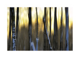 The Forest at Dawn Giclee Print by Marvin Pelkey