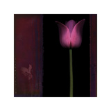 Red Tulip I Giclee Print by Rick Filler