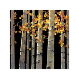 Aspen Grove Giclee Print by Michael O'Toole