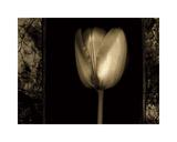 White Tulipa II Giclee Print by Rick Filler