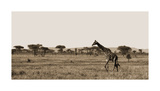 Serengeti Horizons II Giclee Print by Jeff/Boyce Maihara/Watt