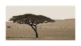 Serengeti Horizons I Giclee Print by Jeff/Boyce Maihara/Watt