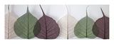 Leafy Address Wydruk giclee autor Assaf Frank