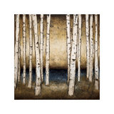 Birch Landing Giclee Print by Patrick St. Germain