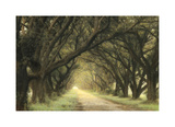 Evergreen Alley Giclee Print by William Guion