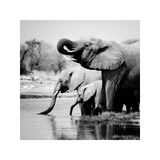 Namibia Elephants Giclee Print by Nina Papiorek