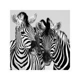 Namibia Zebras Giclée-tryk af Nina Papiorek