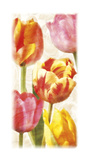 Glowing Tulips II Giclee Print by Janel Pahl