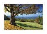 Blue Ridge Beauty Giclee Print by Mike Jones