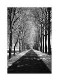 Follow Me Giclee-trykk av Ily Szilagyi