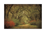 Road Lined With Oaks & Flowers Giclee Print by William Guion