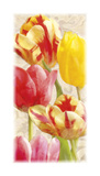 Glowing Tulips I Giclee Print by Janel Pahl